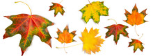 Banner Autumn Pattern Maple Le...