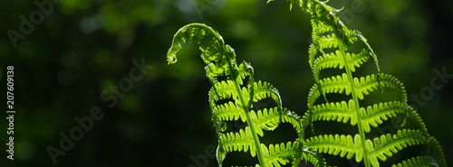 banner spring bright green fern background