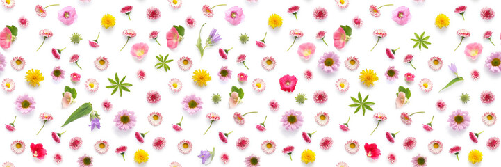Seamless pattern from plants, wild flowers  isolated on white background, flat lay, top view.