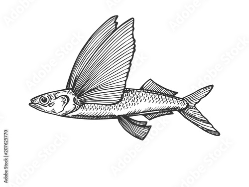 Slika na platnu Flying fish engraving vector illustration