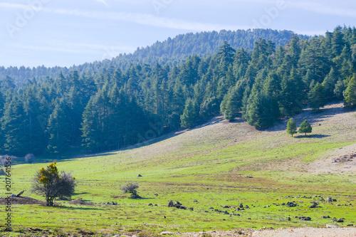 Foto op Canvas Pistache Landscape in the middle Atlas