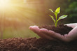 canvas print picture - closeup hand of person holding abundance soil with young plant in hand   for agriculture or planting peach nature concept.