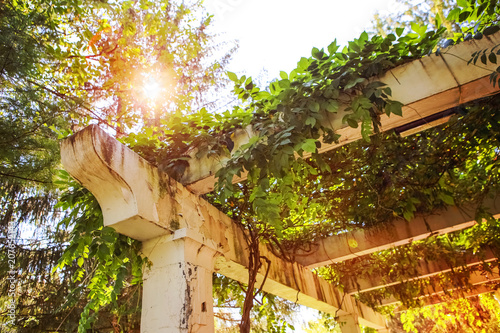 Photo An old pergola in a garden with vines growing on it in the sunshine