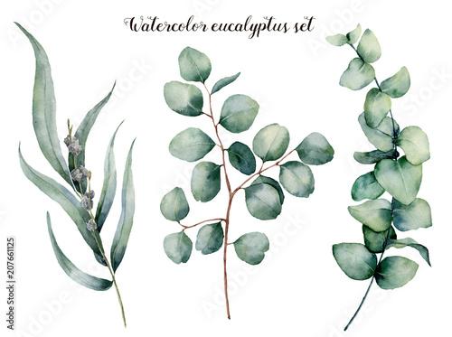 Foto  Watercolor eucalyptus realistic set