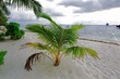 Lovely young green tropical plants on the white sand coast. Blue water of Indian Ocean, Maldives.
