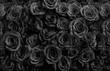 dark black roses
