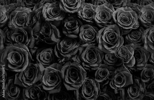 Naklejka premium ciemne czarne róże