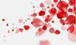 Falling Red rose petals on a transparent background.Vector illustration