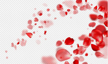 Falling Red Rose Petals On A T...