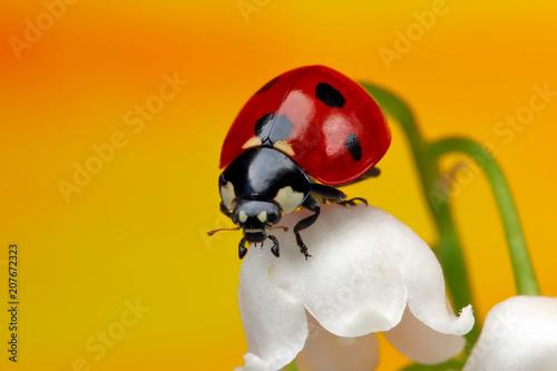 Ladybug on a flower.