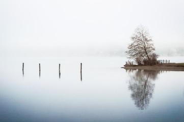 Tree reflection on a foggy lake