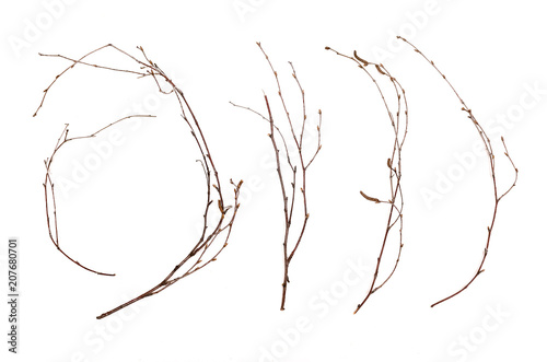 Canvas Print Birch branches isolated on white background