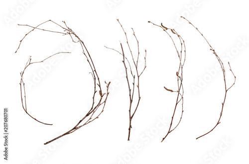 Obraz na plátně Birch branches isolated on white background