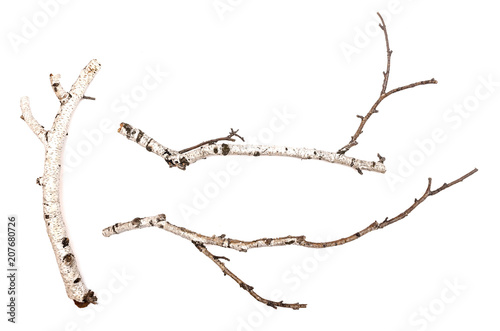 Fototapeta Birch branches isolated on white background. Natural decoration elements. obraz