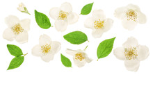 Jasmine Flower Decorated With ...