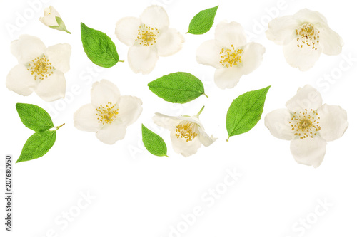 Photographie jasmine flower decorated with green leaves isolated on white background closeup