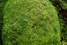 Thick Green Moss Texture