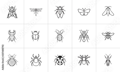 Fotografia Insects sketch icon set for web, mobile and infographics