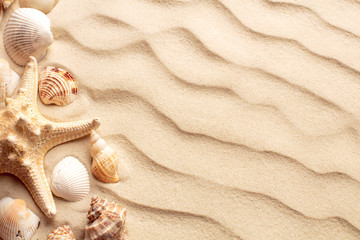 top view of sand dunes with seashells