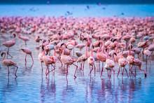 Kenya Africa. Flock Of Flamingos. African Flamingos. Safari In Kenya. Pink Birds.
