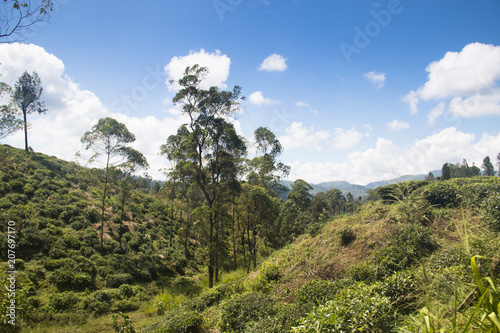 Foto op Plexiglas Blauwe hemel Landscape in the highlands of Sri Lanka.