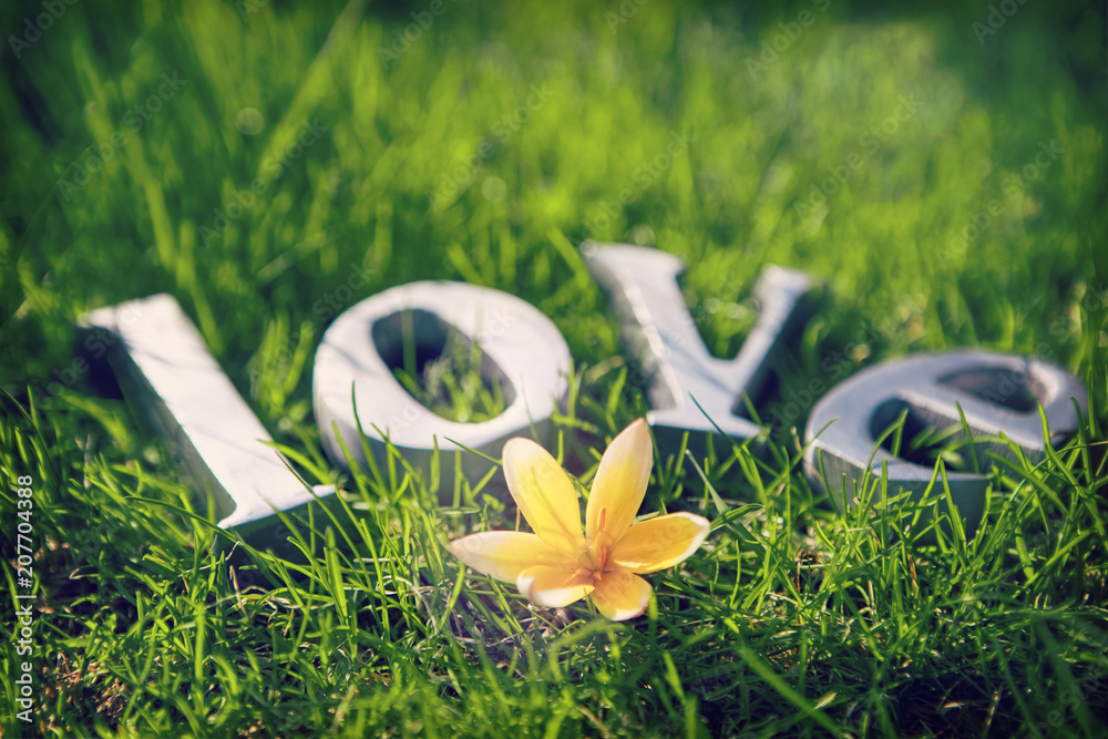 Fototapeta Metal letters spelling Love with a small yellow tulip in the spring grass