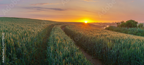 sunrise over the spring field of young grain