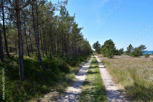 Tuinposter Weg in bos Impressions from Bialogora