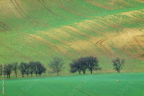 Foto op Canvas Pistache Rolling Hills, South Moravia, Czech Republic
