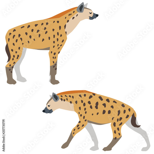 Valokuva Vector illustration of standing and walking hyenas isolated on white background