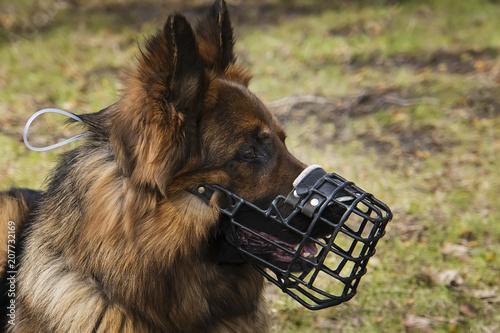 Dog with Muzzle portrait Fototapete