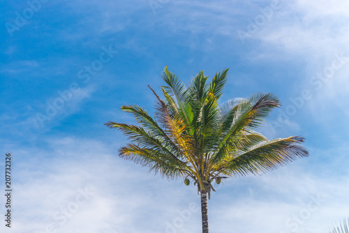 Spoed Foto op Canvas Palm boom Coconut palm tree perspective view from bottom floor