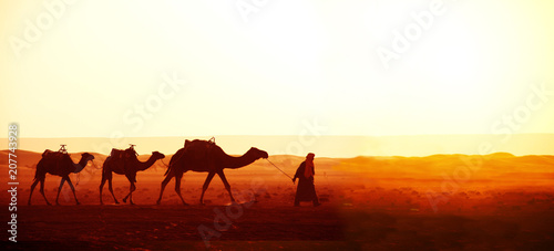 Fotografija  Caravan of camels in Sahara desert, Morocco