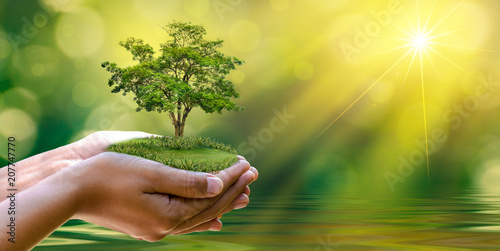 Poster Spring environment Earth Day In the hands of trees growing seedlings. Bokeh green Background Female hand holding tree on nature field grass Forest conservation concept