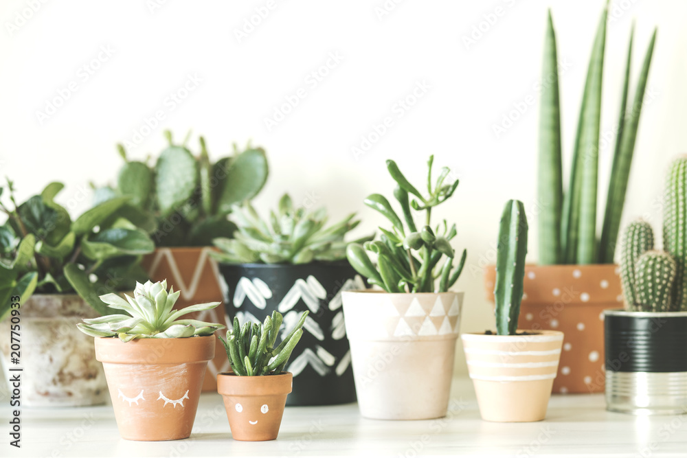 Fototapety, obrazy: Modern composition of home garden filled a lot of plants in different hipster pots. White background wall of home garden.