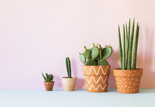 The Stylish Interior Filled A Lot Of Plants In Different Hipster Clay Pots With Copy Space. Modern Plant Compostion With Pink Background Wall.