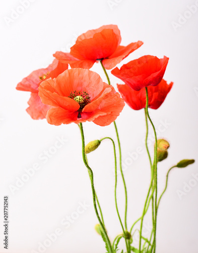 Foto op Canvas Klaprozen Poppy macro isolated