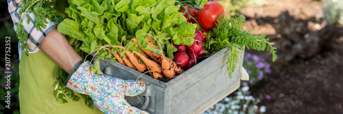 Unrecognizable female farmer holding crate full of freshly harvested vegetables in her garden Fototapet