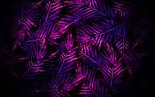 Tropical Leaves, Neon Light