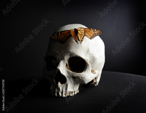 Valokuva  portrait of a human skull with a a monarch butterfly, photographed on black studio background