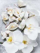 White Orchid Flowers, Close Up Overhead View