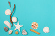 Tropical Background. Seashell on colourful trendy modern fashion background.