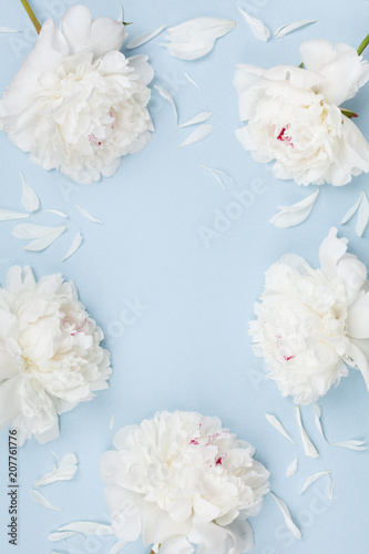 Floral frame of beautiful white peony flowers on blue pastel table top view and flat lay style.
