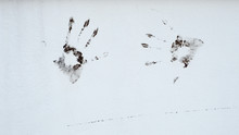 Handprints On The White Concrete Wall Background