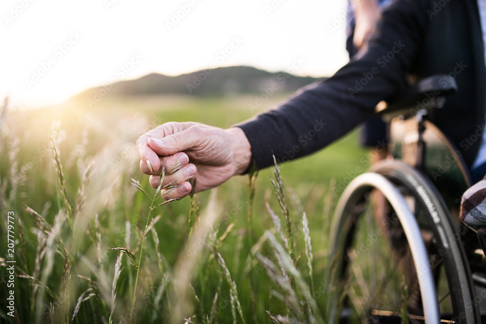 Fototapety, obrazy: A hand of a senior man in wheelchair holding grass flower in nature. Close up.