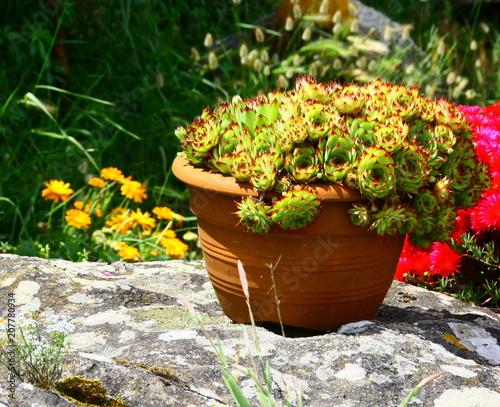 pot de succulentes,et fleurs ,décoration de jardin – kaufen ...