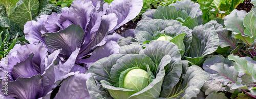 Gemüseanbau im Garten - Banner