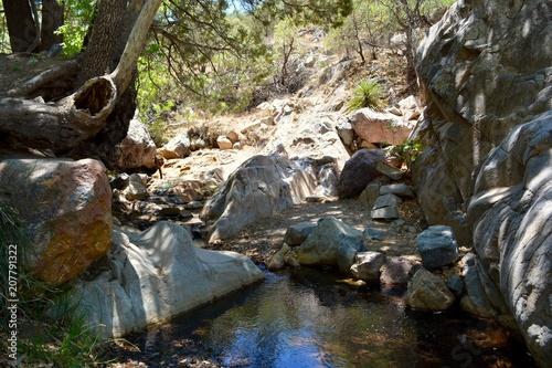 Garden Poster Forest river Madera Canyon Santa Rita Mountains Hiking Tucson Arizona