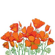 Vector Bouquet Of Outline Oran...
