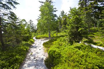 Fototapeta na wymiar Szczeliniec Wielki, Stolowe Mountains National Park in Poland